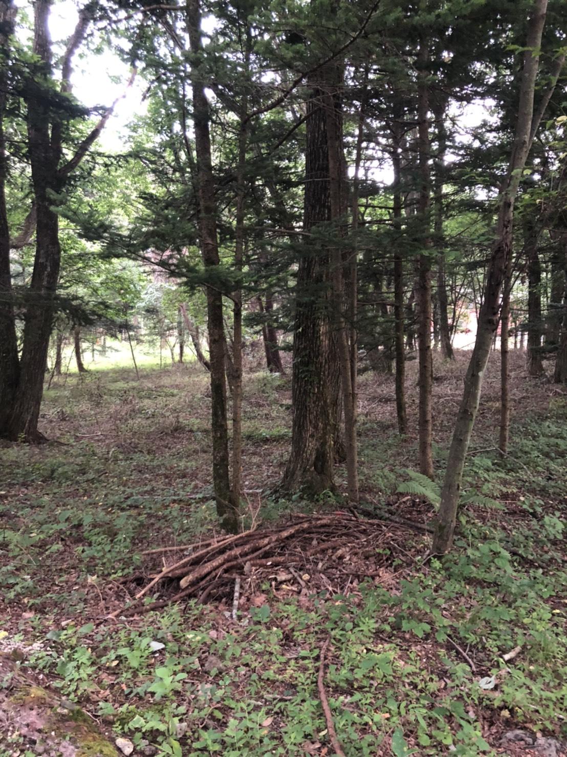 【中軽井沢土地】美しい森の中の軽井沢ライフ