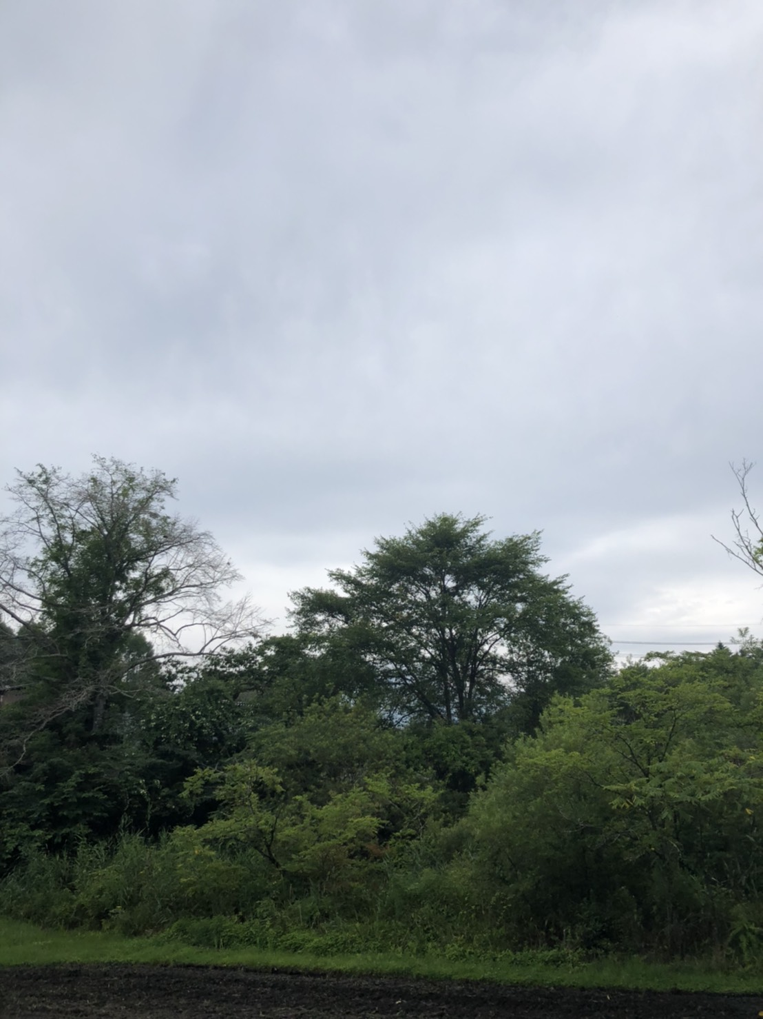 【中軽井沢土地】利便性の良い緑の中の別荘
