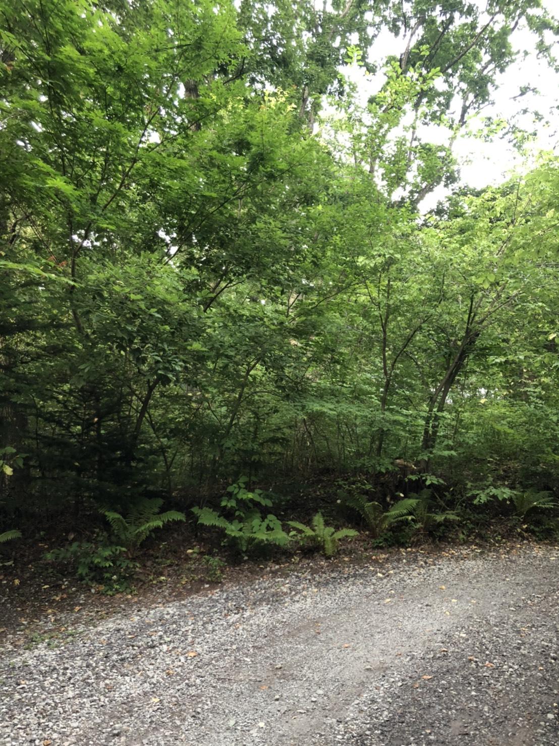 【上の原別荘地_土地】屋根のない病院、軽井沢で森林浴を満喫しませんか