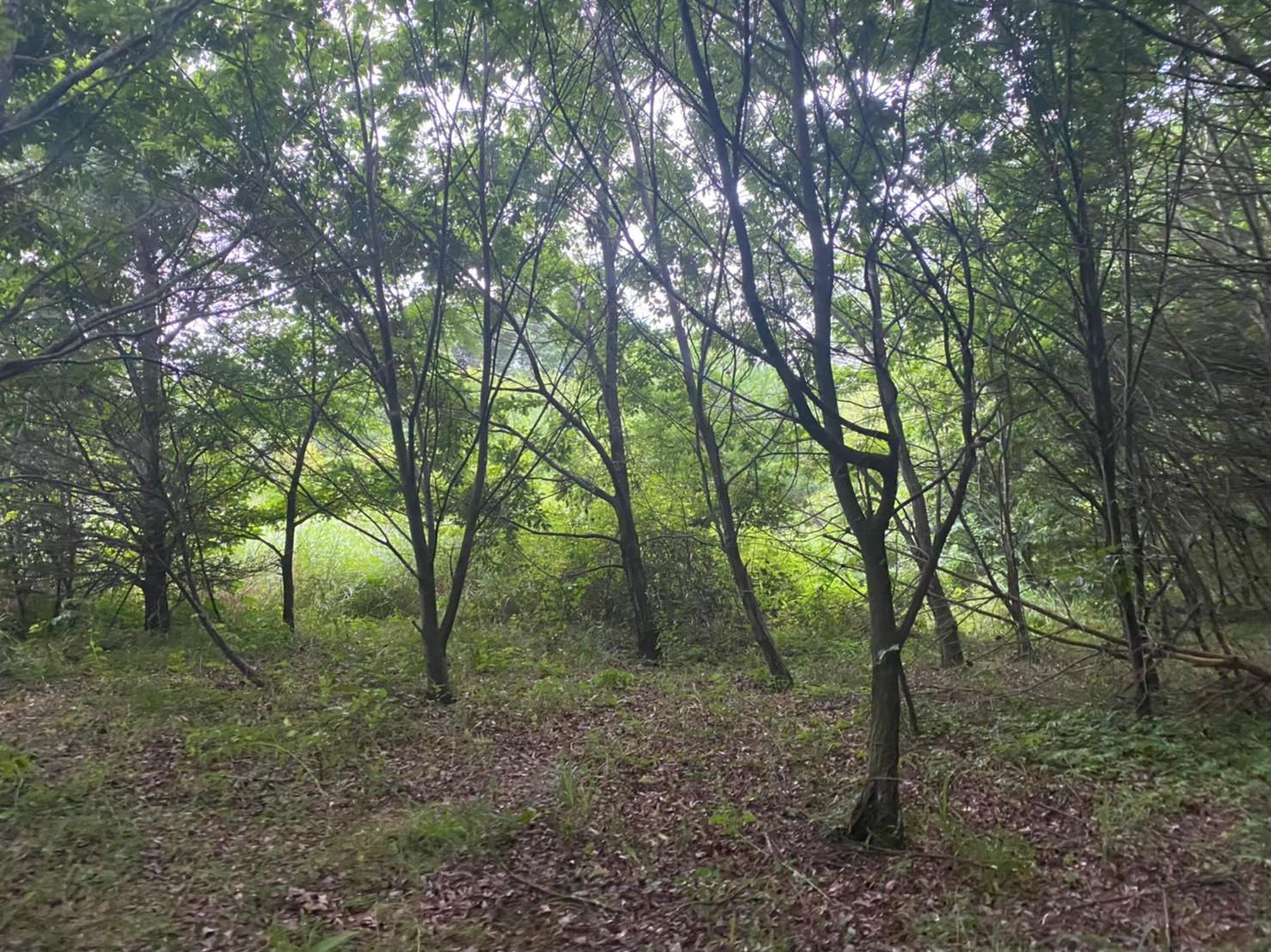商談中【追分土地】浅間山ライン沿い 緑豊かな広大な土地